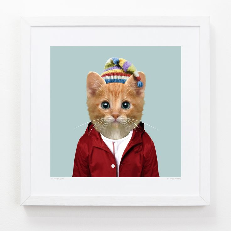 Kitten Art Print art print | Zoo Portrait | Art Prints, Stationery & Gifts from Evermade