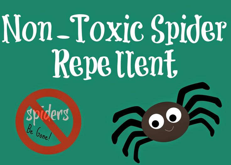 Homemade Spider Repellent  Peppermint oil and dish soap with water.