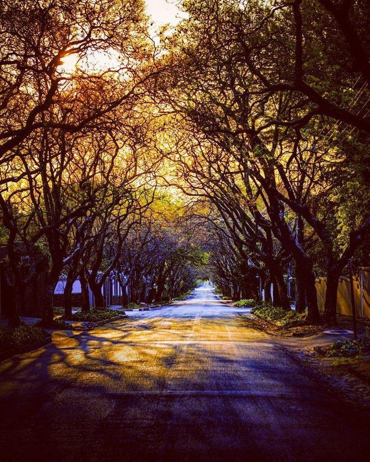#jacaranda season starting in #johannesburg #southafrica #colour #photographs by #kevinrichards #fb