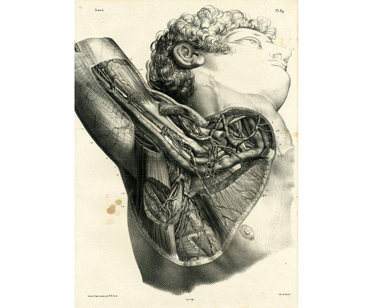 1836 Muscles, Artères, Cou, Région Axillaire, Tête, Epaule, Ganglions lymphatiques. Planche Anatomique Bourgery, Poster Anatomie Medecine de la boutique sofrenchvintage sur Etsy