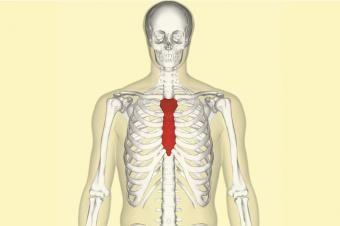 知らなきゃ損?免疫力をグングン高める裏ワザ!|胸腺を強くし、免疫を上げる方法とは?胸腺をマッサージする事です。胸腺は胸骨(胸の真ん中の骨。図の赤い部分)の内側にあります。 指やこぶしで、グリグリとマッサージして、刺激を与える事で、血流が良くなり、胸腺は活性化します! また、胸骨をマッサージすると、呼吸がしやすくなり、背中の痛みもとれ、自律神経のバランスを整えてくれるので、一石二鳥です!