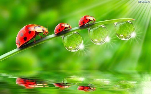 """""""Son le piccole cose inattese  le gocce più dolci da bere  alla coppa della vita""""  - ©Riflessi d'acqua -  Riflessi d'acqua-diventa fan"""