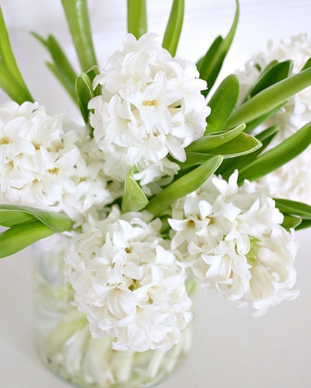White Hyacinths in a vase.