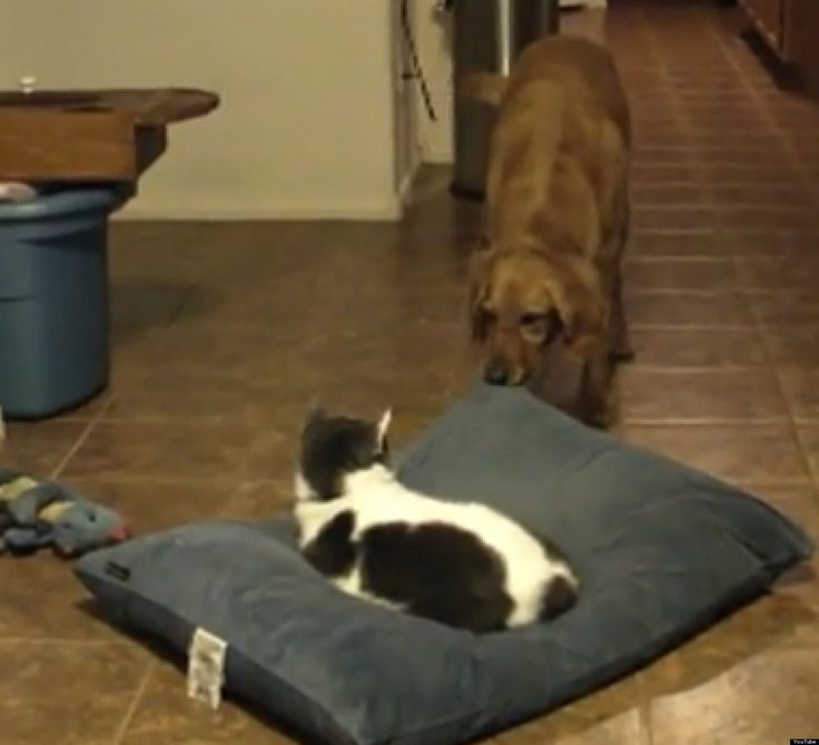 Cats Stealing Dog Beds Compilation Huffington Post