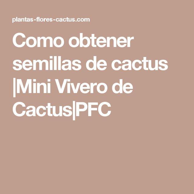 Como obtener semillas de cactus |Mini Vivero de Cactus|PFC