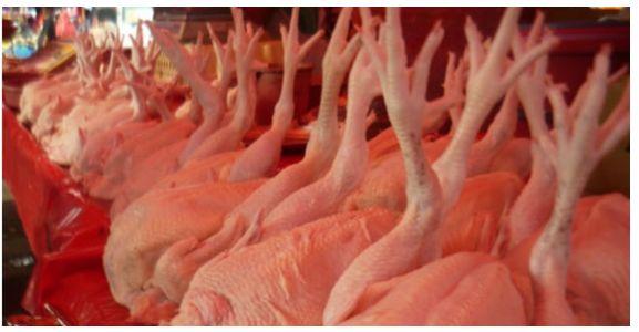 Tips Ayam Segar Kakinya Harus ke Atas Ini Viral di Media Sosial. Ternyata.. | News Dunia Kini