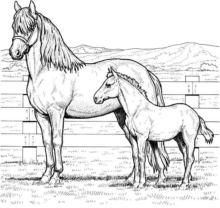 Mare And Colt Coloring Page From Horses Category Select 27278 Printable Crafts Of Cartoons Nature Animals Bible Many More