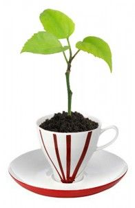 Coffee Grounds For Garden Plants (sprinkle around plants to repel slugs and other pests)