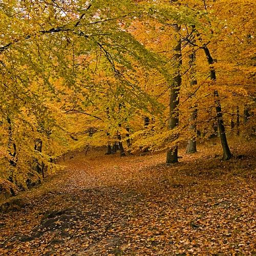 Autumn in Skåne
