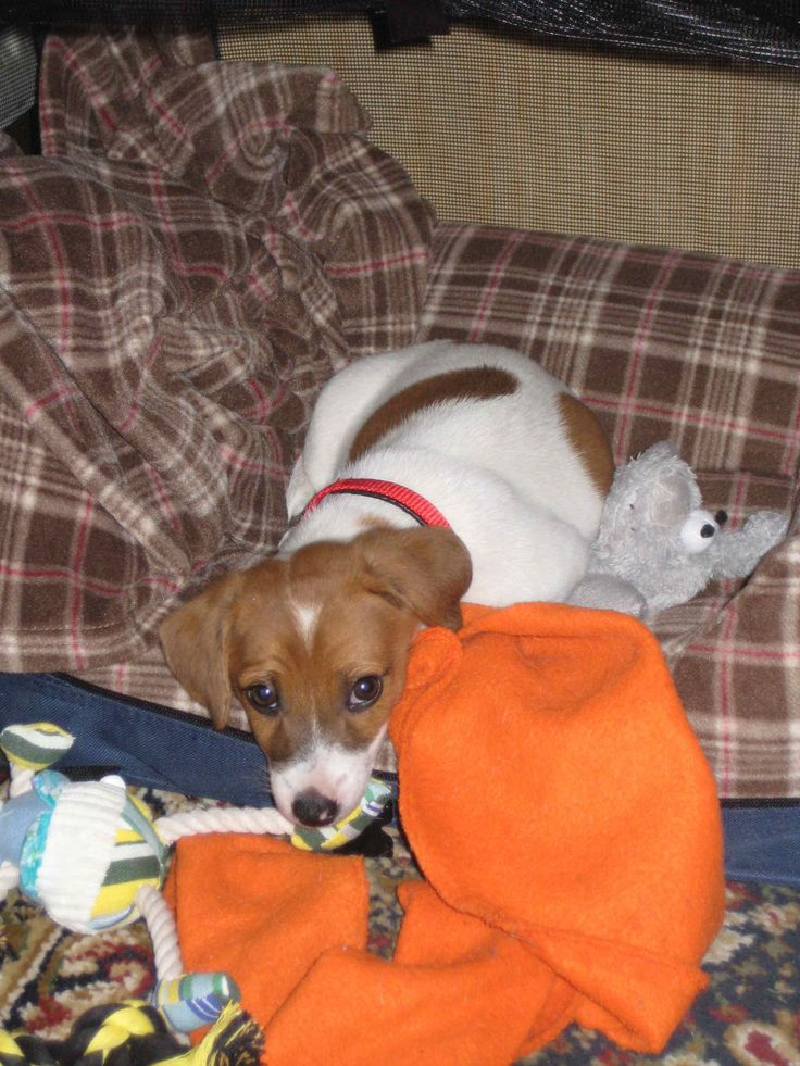 I remember how tiring it was when I was a puppy. Look at all of those toys!