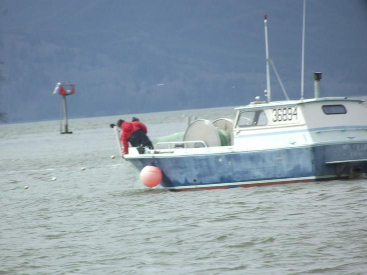 Gill netting commercial fishing pinterest for Gill net fishing