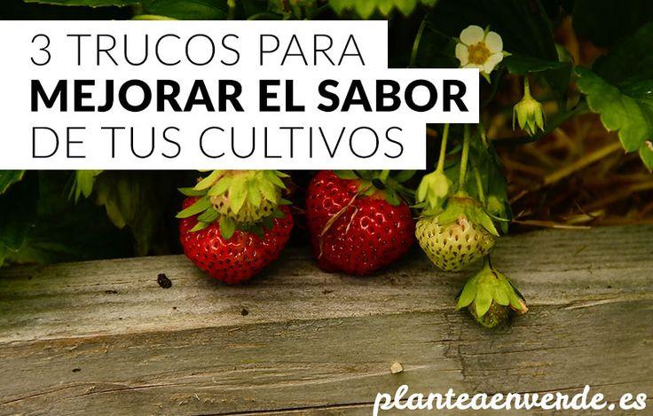 Trucos para mejorar el sabor de tus cultivos. #huerto #cocina