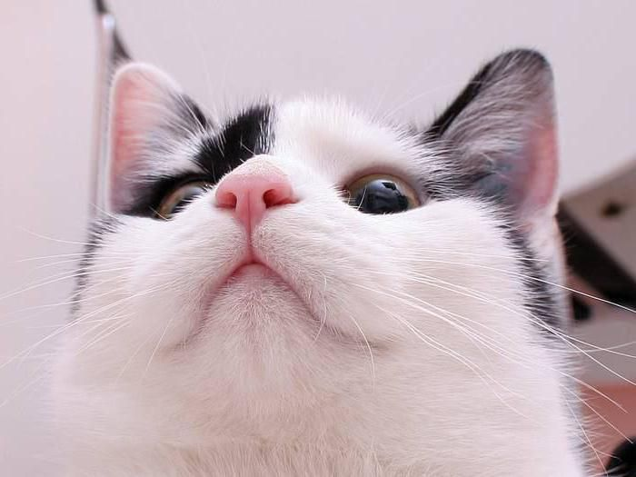 why does the cat have a very wet nose