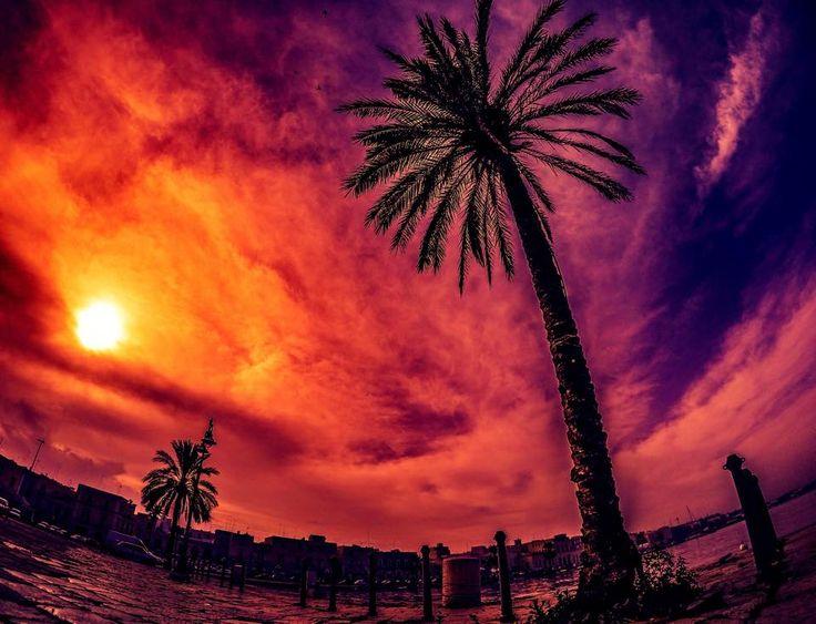 Apulian Palm into the Sky #molfetta #puglia #goprojet #studiofourelements #apulianplacesin4k