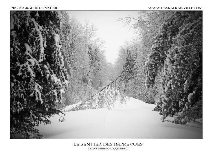 Le sentier est recouvert de glace après une tempête de verglas qui a durée trois jours. Les arbres, trop lourd à cause du poids de la glace se couchent sur le sentier. J'entendais les branches des arbres se casser dans la forêt et d'autres s'effondrer... Les risques d'être photographe nature!  (Prise à Shefford, Québec, Canada)