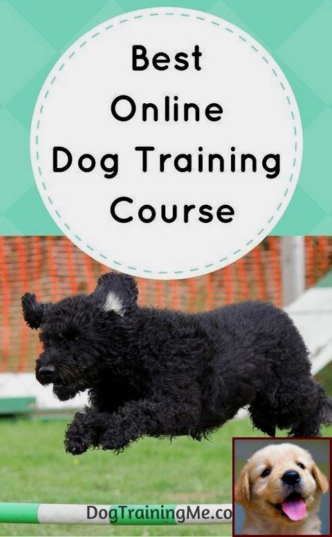 1 Have Dog Behavior Problems Learn About House Training A Puppy For Dummies And Dog Training Classes Las Vegas Training Your Dog Online Dog Training Dog Training
