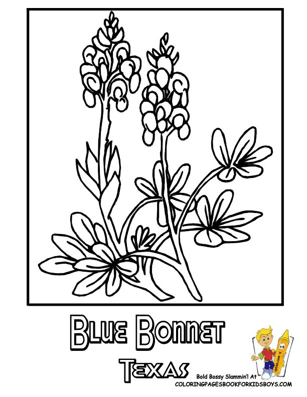 state of texas coloring page - 251 best usa coloring pages images on pinterest