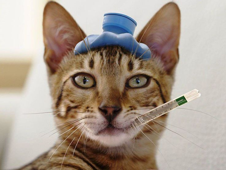 котик приболел картинки базы
