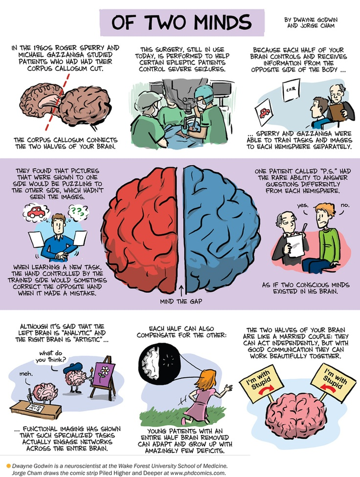 the effects of the split brain in man I've always been interested in split brain procedures and how it affects patients  after learning about split brains a little bit during our first class.