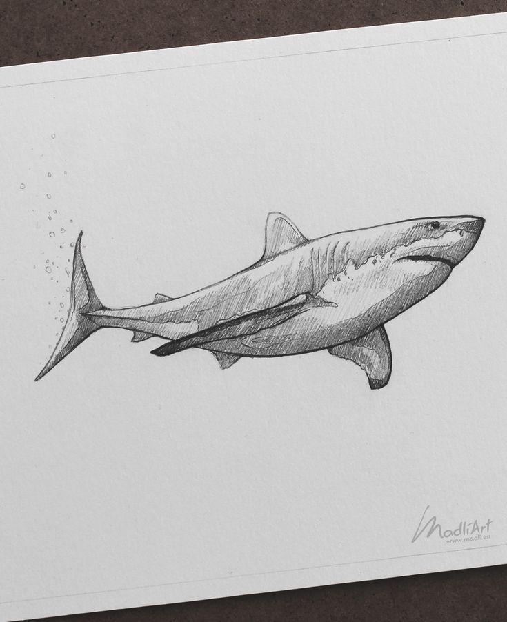 Акулы картинки карандашом как именно