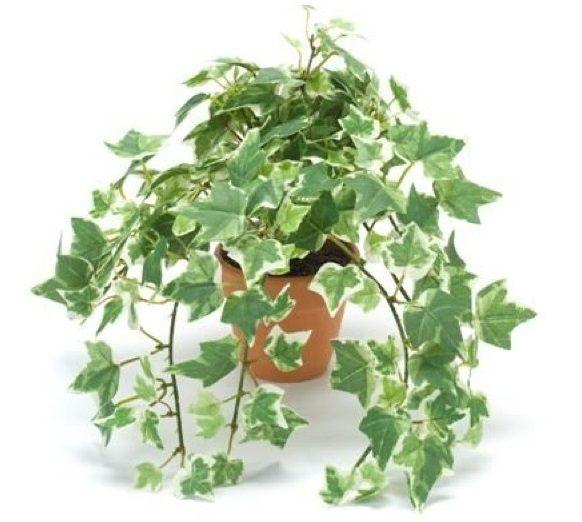 231 best images about plantas de sombra para interiores for Mejores plantas para interior