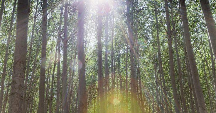 Los 2 componentes principales de un ecosistema. Los ecosistemas consisten en formas de vida que existen en relación simbiótica con su entorno. Las formas de vida en los ecosistemas compiten entre sí para convertirse en el modo de reproducción de mayor éxito y sobreviven en un nicho o medio ambiente determinado. Existen dos componentes principales en un ecosistema: abióticos y bióticos. Los ...