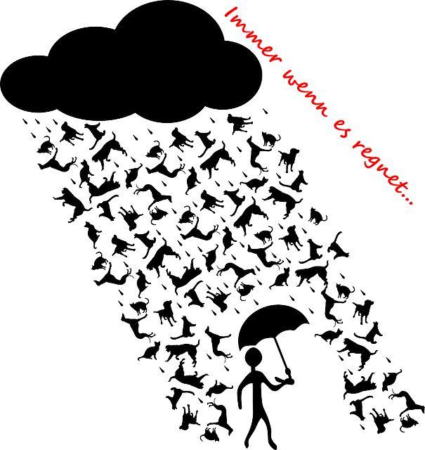 Immer wenn es regnet... Immer wenn es regnet, muss ich daran denken... nein, nicht an Anna, sondern daran, dass uns nicht langweilig ist. :) UPDATE: Eigentlich wollte ich im Februar an der miDoggy Parade von Julia teilnehmen, der Artikel war schon geschrieben, uns kam aber dann die OP von Jack