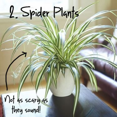 Apartment Gardening: 10 Plants You Couldn't Kill if you Tried.