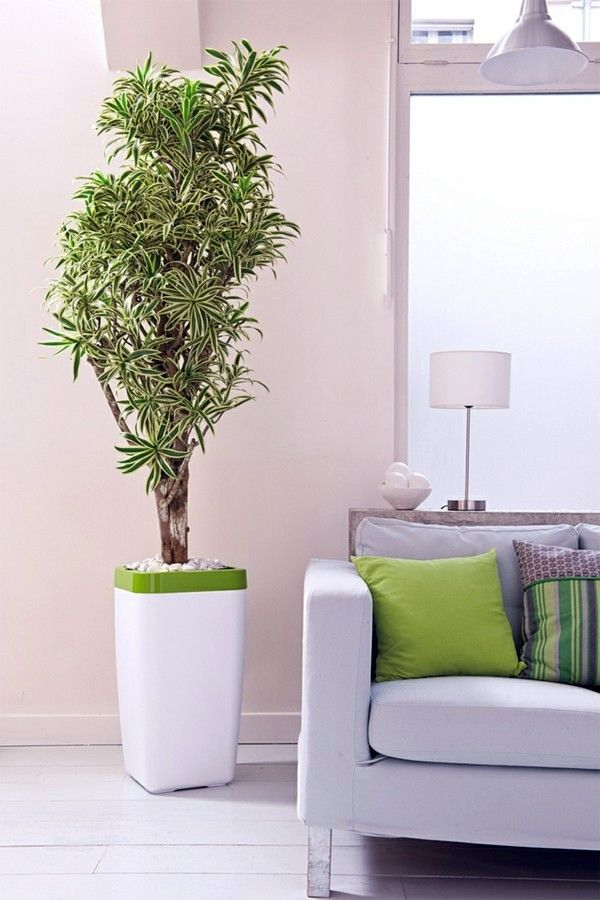 86 best Interior plants designs ideas images on Pinterest