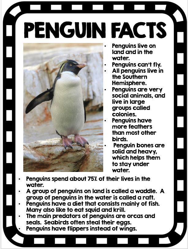 25+ best ideas about Penguin information on Pinterest ...