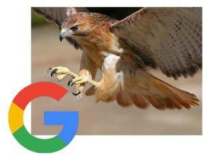 Have you heard about Google's latest Hawk update? It is improving SEO for local businesses by adjusting Google's proximity filter. Read more about it on our blog and share your comments with us!