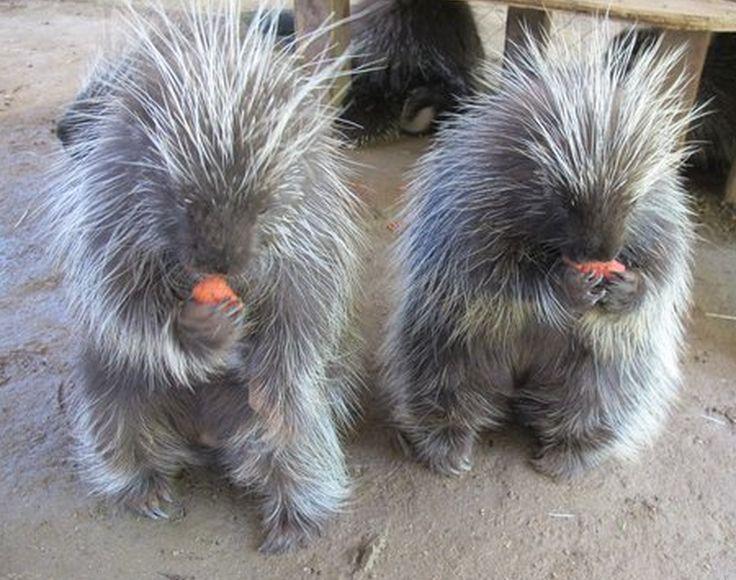 41 best Wildlife Biologist images on Pinterest Wildlife - sample wildlife biologist resume