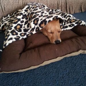 Doggy Bed and Blanket Set | AllFreeSewing.com