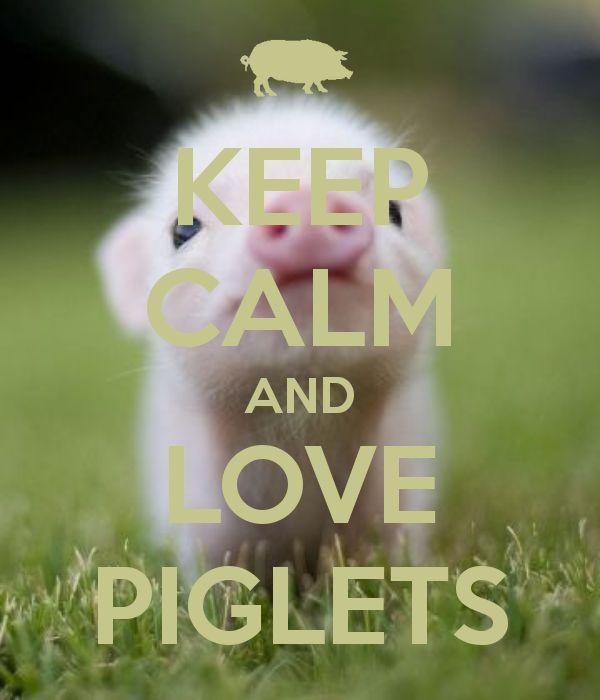 Best 25+ Piglets Ideas On Pinterest
