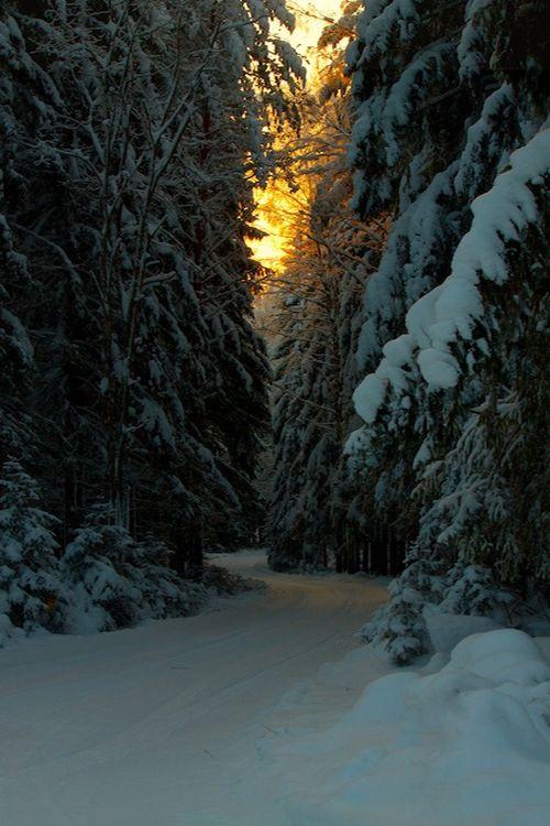 Winter Spruce Road, Finland
