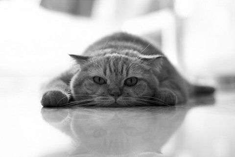 I would move, but I'm a cat....Amazing Cat, Tires Cat, Kitty Cat, Funny Cat, Kitty Kitty, Cat Le, Angels, Flats Cat, Cat Lady