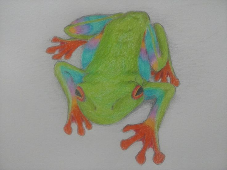 Rainbow Red Eye Tree Frog