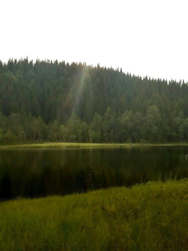 ...en dag i skogen...
