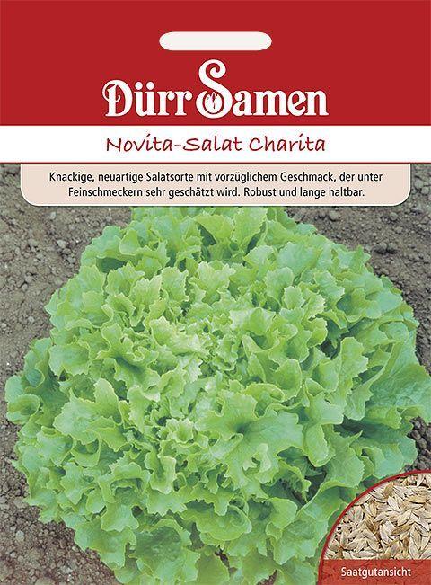 Dürr Samen Novita-Salat  Charita