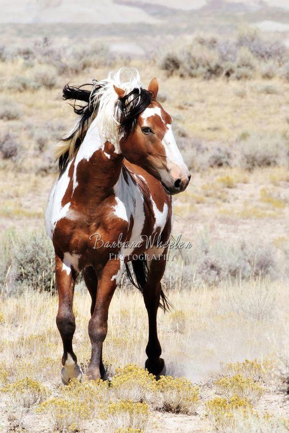 Barbara Wheeler Wild Horse Photography.