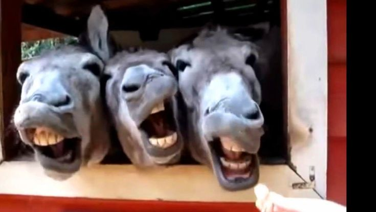 Vicces Videók 2015 - Vicces Állatok Így Vicces Hangok Összeállítása