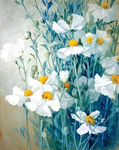 edisoncapricorn: Botanical illustration Matilija Poppies, Albert Valentien (1862-1925)