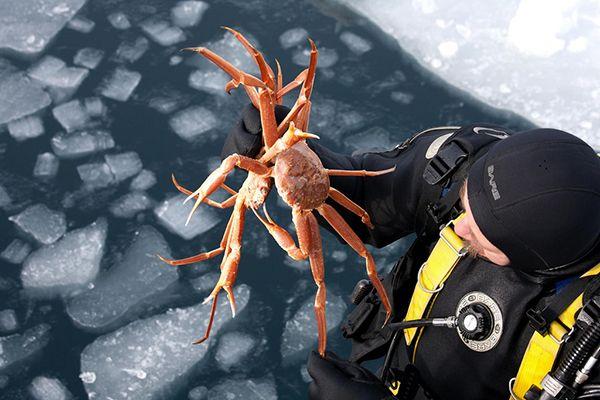 Дайвинг в Гренландии #Greenland