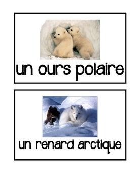 French Arctic Animals - Flashcards, Word wall words, BANG