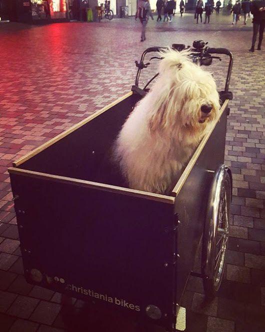 By Ewelina Dabrowa - Christiania Bikes® UK - Google+