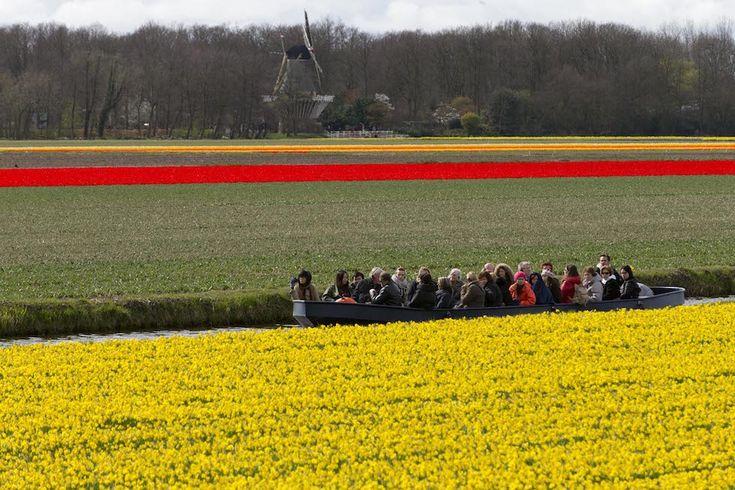 IlPost - Campi fioriti di narcisi e tulipani, 26 marzo 2014. (AP Photo/Peter Dejong) - Campi+fioriti+di+narcisi+e+tulipani,+26+marzo+2014.+ (AP+Photo/Peter+Dejong)