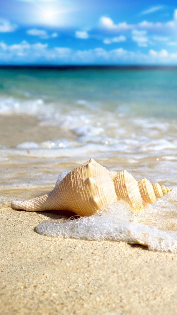 Seashells wallpaper 24 - Seashell Nice Beach Blue Sky Just Awesome Tap To See More Nature