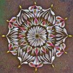alstroemeria peruvian lily, dosa 818 - Los Angeles, CA