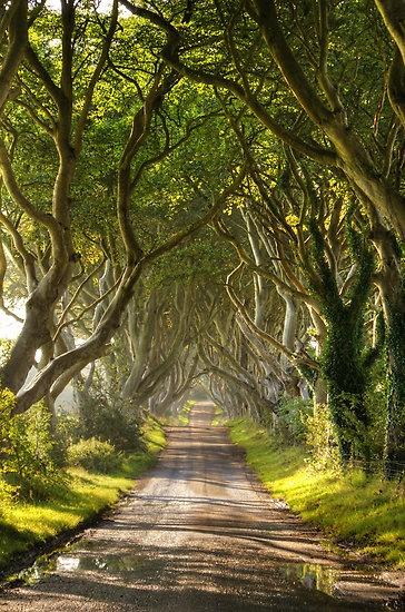 The Dark Hedges, Antrim, IrelandThe Roads, Nature Wonder, Nature Pictures, Magic Places, Families Trees, Northern Ireland, Dark Hedges, Nature Phenomena, County Antrim