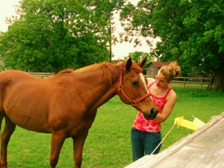 My western pleasure mare Zippy <3